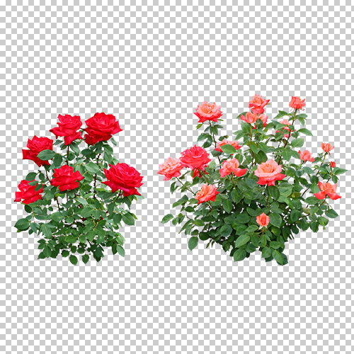 Best素材 高解像度の切り抜き写真 バラ01 ダウンロード版 建プロショップ